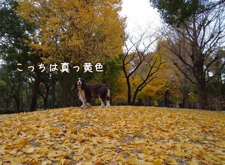 Img_4461_2